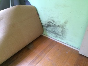 Mould  a sign of rising damp