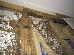 Follow My Reno Attack Of The Termites Shebuilds